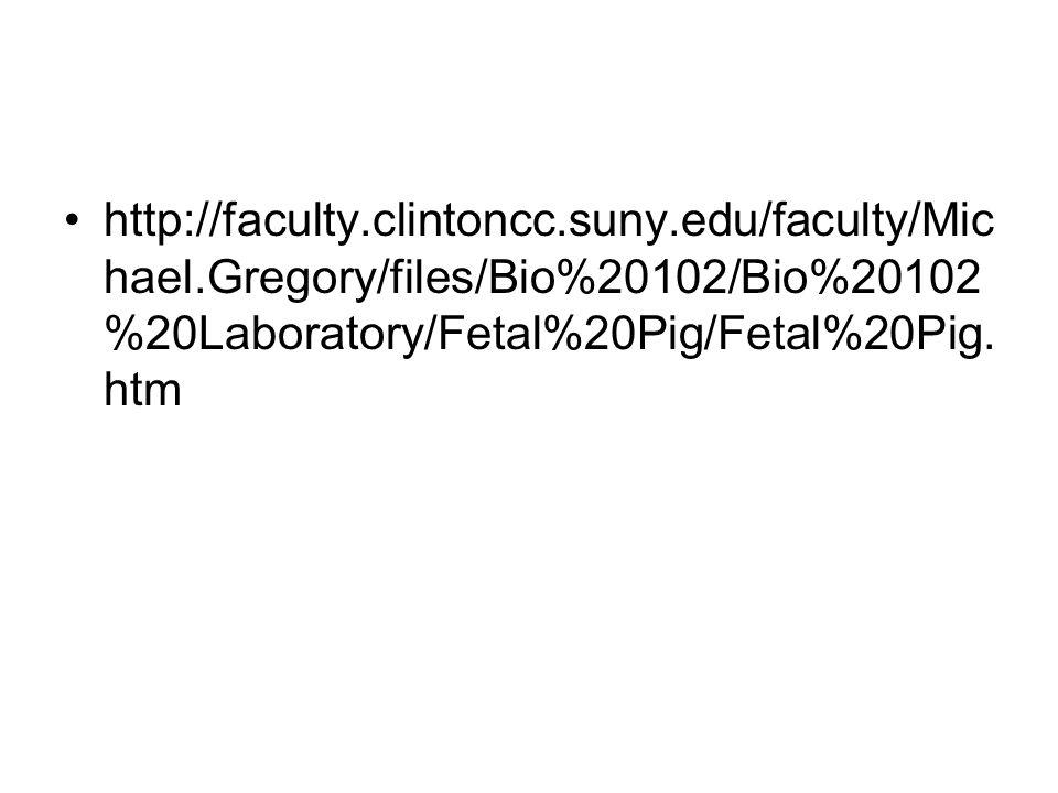 http://faculty.clintoncc.suny.edu/faculty/Mic hael.Gregory/files/Bio%20102/Bio%20102 %20Laboratory/Fetal%20Pig/Fetal%20Pig. htm