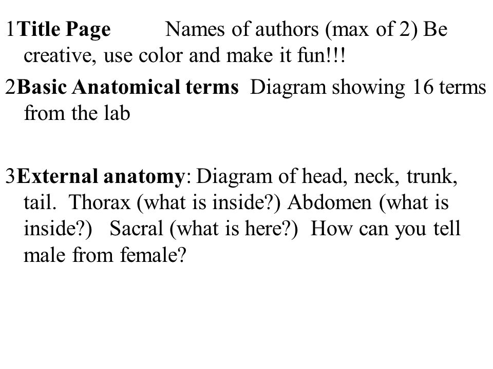 1Title Page Names of authors (max of 2) Be creative, use color and make it fun!!! 2Basic Anatomical terms Diagram showing 16 terms from the lab 3Exter