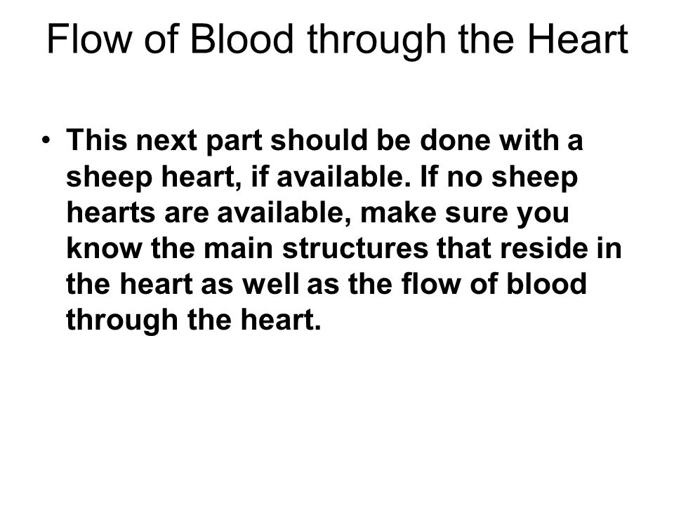 Flow of Blood through the Heart This next part should be done with a sheep heart, if available. If no sheep hearts are available, make sure you know t