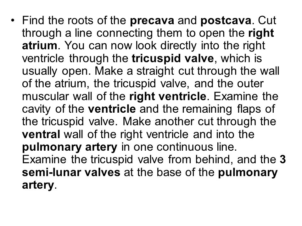 Find the roots of the precava and postcava. Cut through a line connecting them to open the right atrium. You can now look directly into the right vent