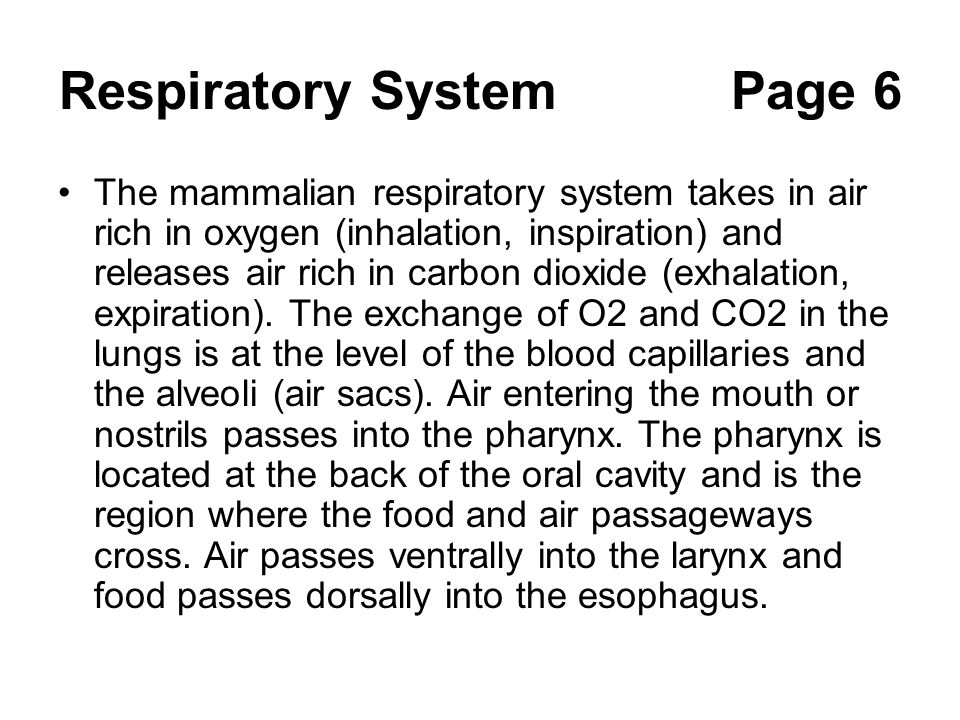 Respiratory SystemPage 6 The mammalian respiratory system takes in air rich in oxygen (inhalation, inspiration) and releases air rich in carbon dioxid