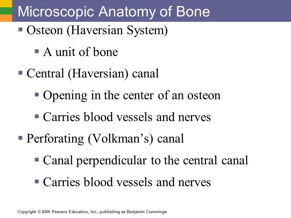 Copyright © 2006 Pearson Education, Inc., publishing as Benjamin Cummings Microscopic Anatomy of Bone Osteon (Haversian System) A unit of bone Central