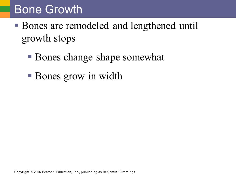 Copyright © 2006 Pearson Education, Inc., publishing as Benjamin Cummings Bone Growth Bones are remodeled and lengthened until growth stops Bones chan