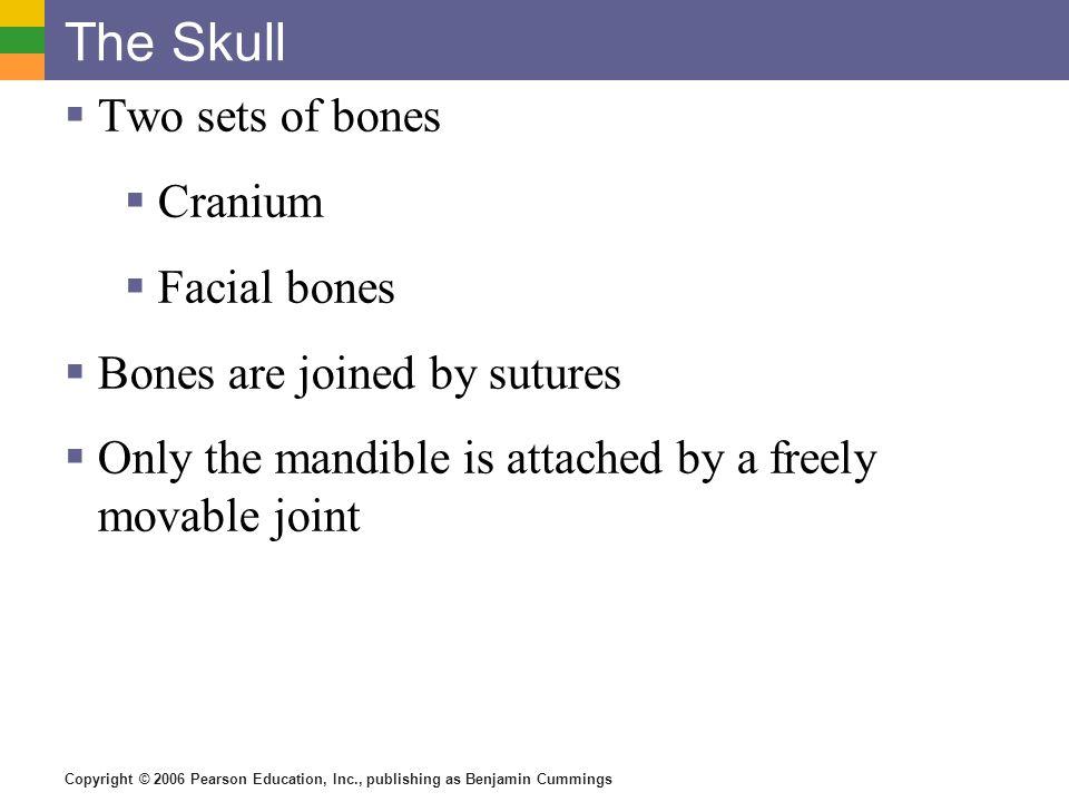 Copyright © 2006 Pearson Education, Inc., publishing as Benjamin Cummings The Skull Two sets of bones Cranium Facial bones Bones are joined by sutures