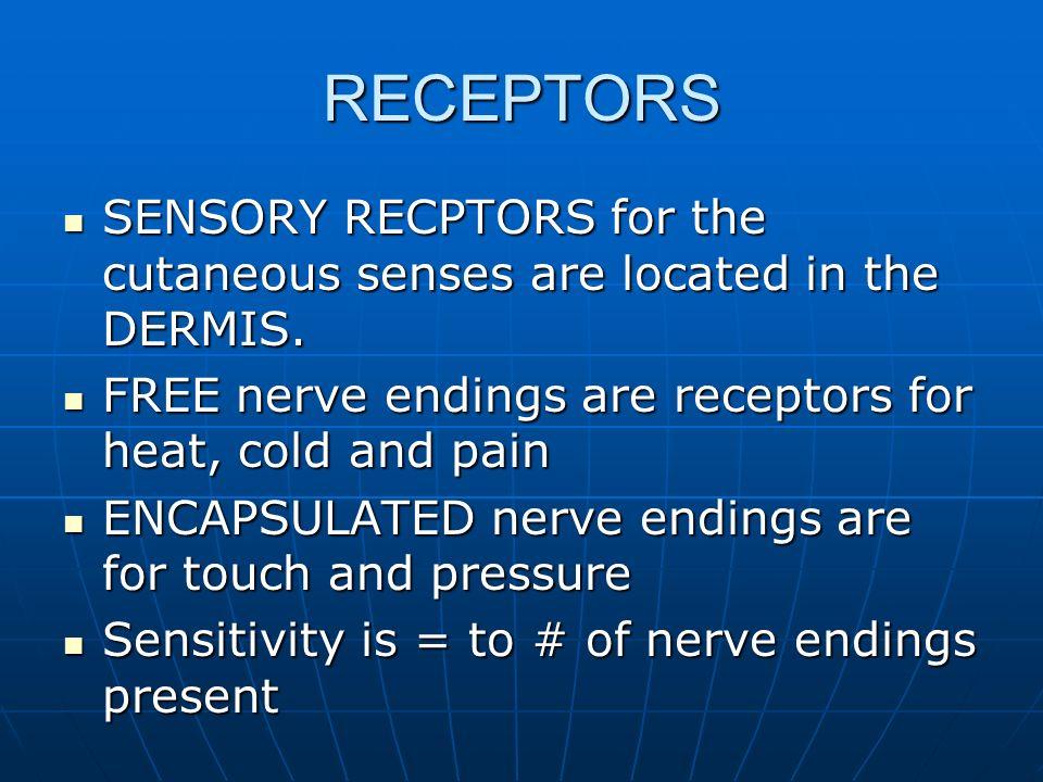 RECEPTORS SENSORY RECPTORS for the cutaneous senses are located in the DERMIS. SENSORY RECPTORS for the cutaneous senses are located in the DERMIS. FR