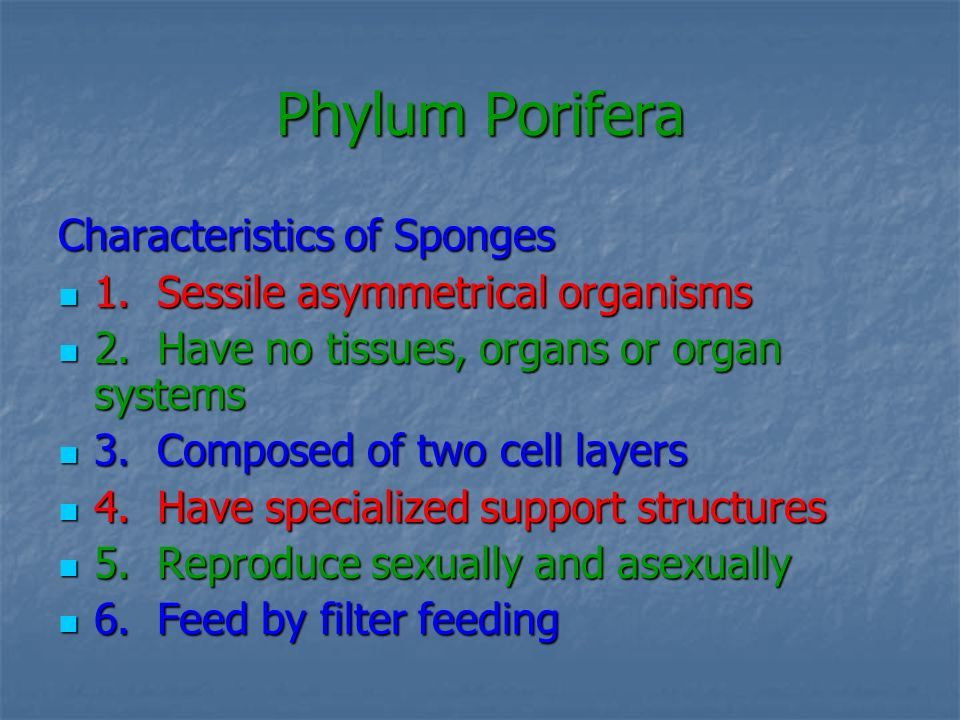 Phylum Porifera Characteristics of Sponges 1. Sessile asymmetrical organisms 1. Sessile asymmetrical organisms 2. Have no tissues, organs or organ sys