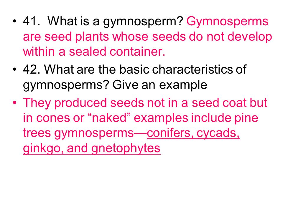 41.What is a gymnosperm.