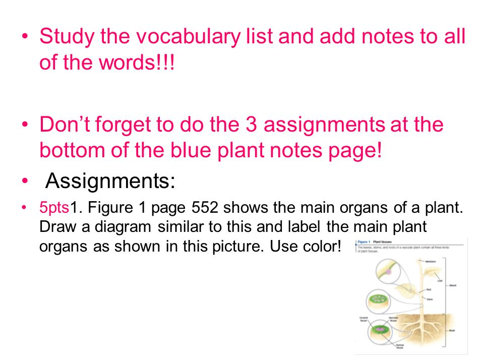 Study the vocabulary list and add notes to all of the words!!.