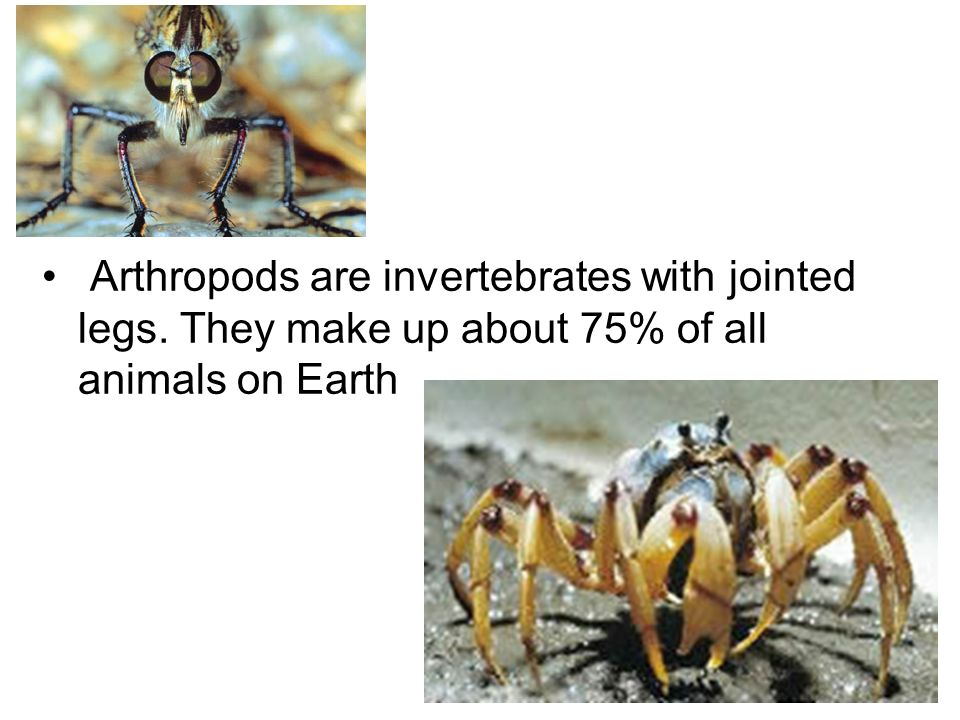 Arthropods are invertebrates with jointed legs. They make up about 75% of all animals on Earth