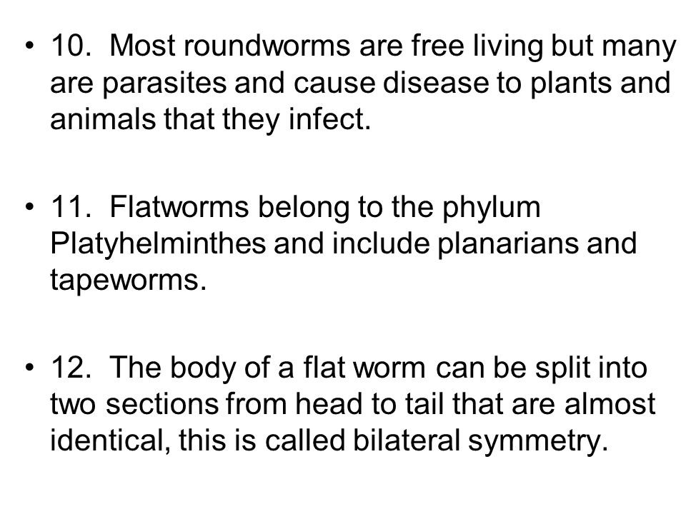 10. Most roundworms are free living but many are parasites and cause disease to plants and animals that they infect. 11. Flatworms belong to the phylu
