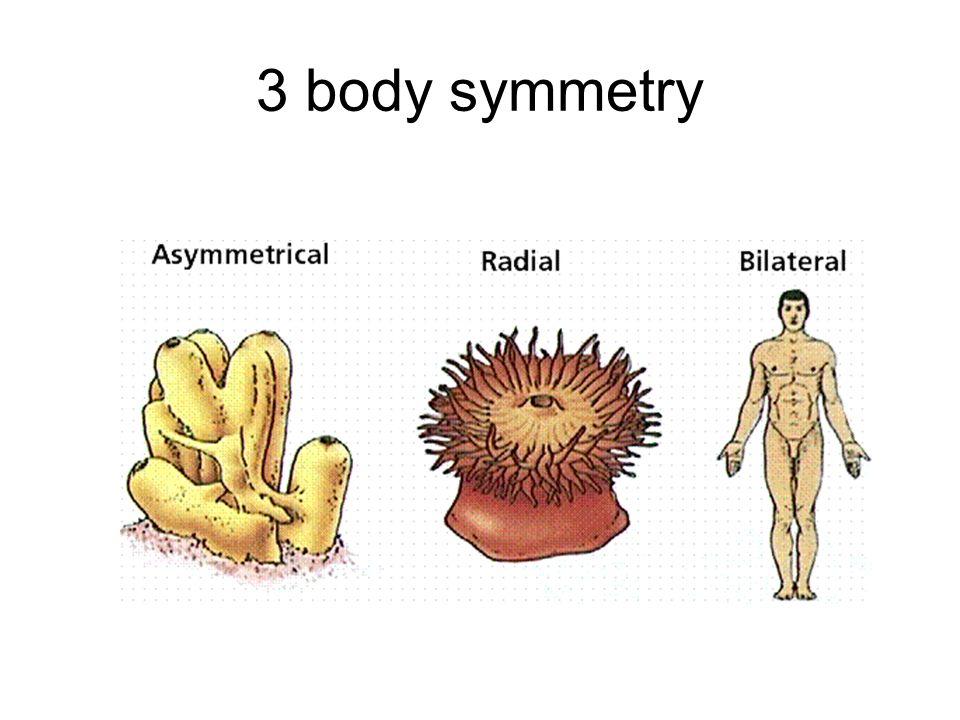 3 body symmetry