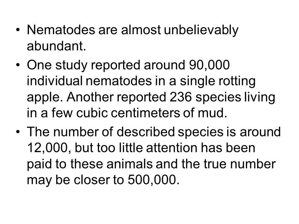 Nematodes are almost unbelievably abundant. One study reported around 90,000 individual nematodes in a single rotting apple. Another reported 236 spec