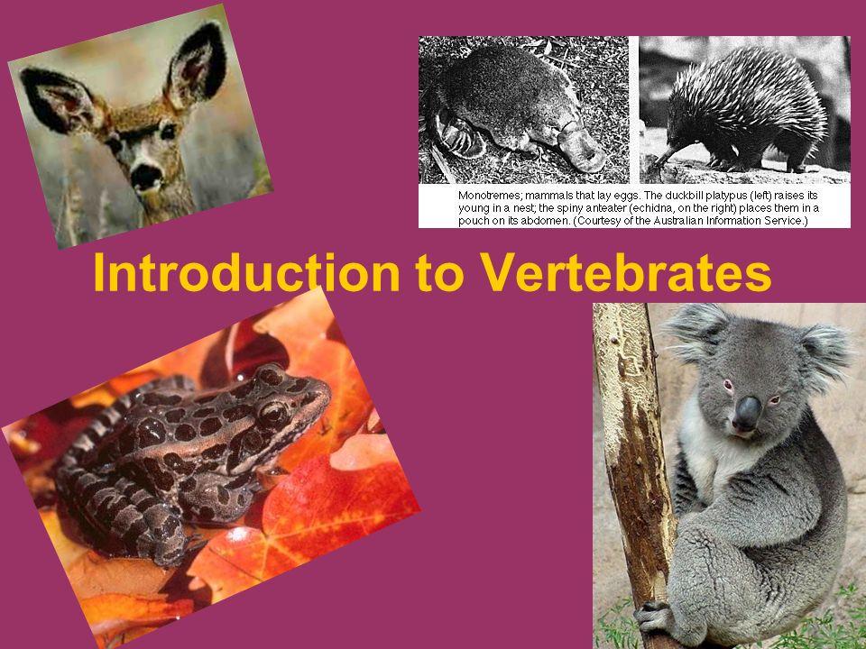 Introduction to Verteb...