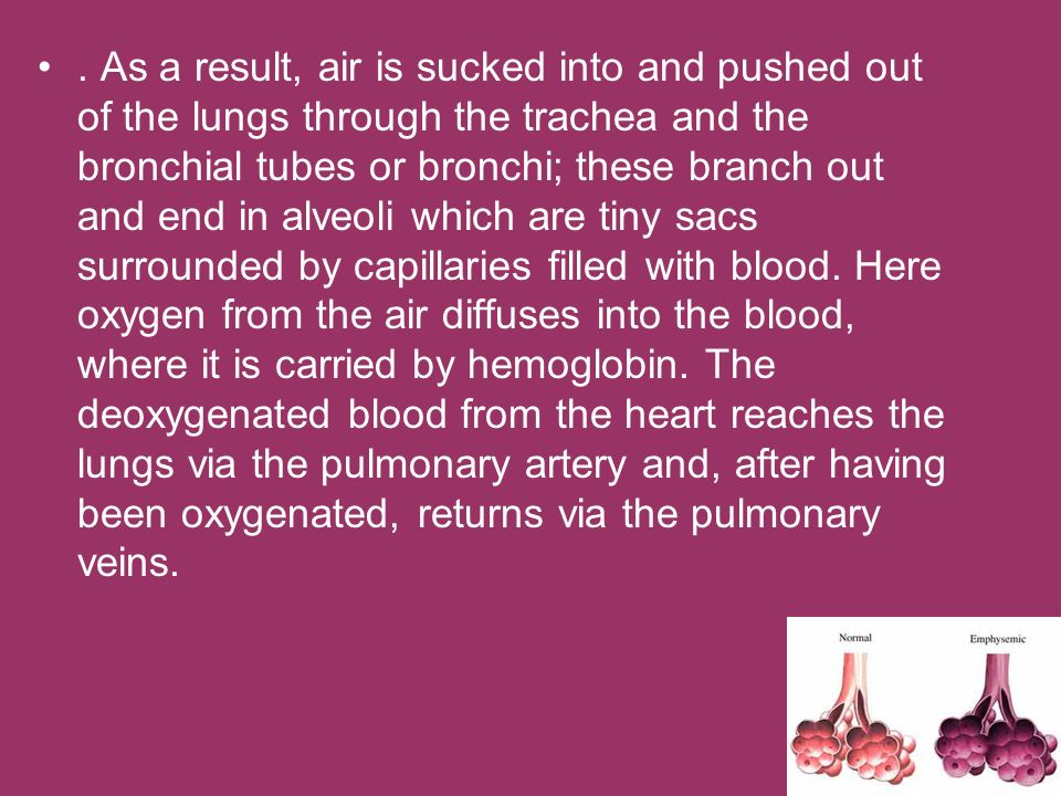 . As a result, air is sucked into and pushed out of the lungs through the trachea and the bronchial tubes or bronchi; these branch out and end in alve