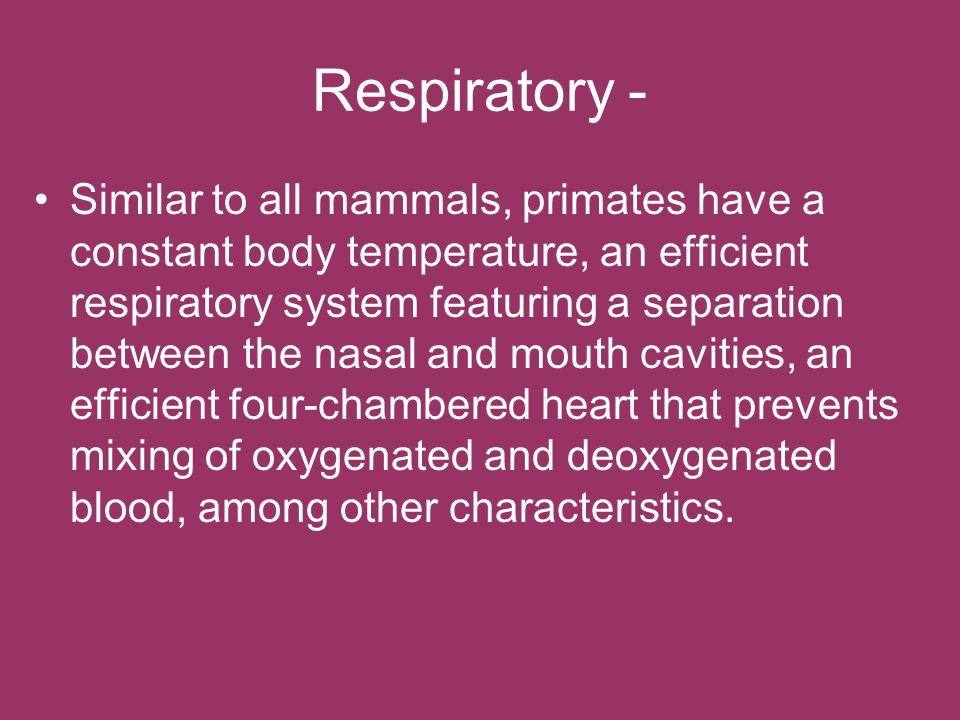 Respiratory - Similar to all mammals, primates have a constant body temperature, an efficient respiratory system featuring a separation between the na