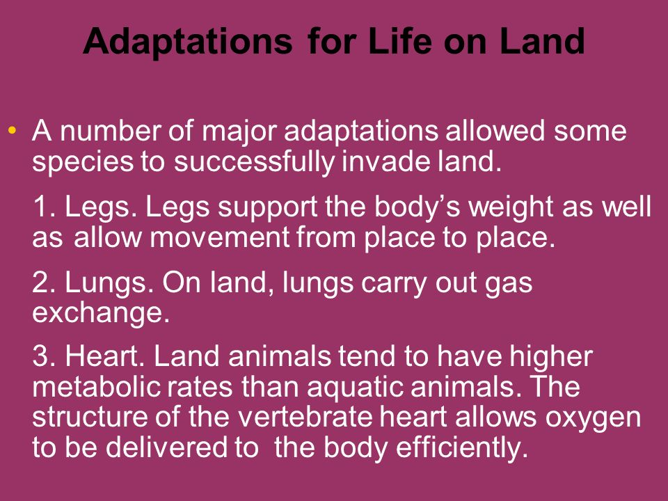 Adaptations for Life on Land A number of major adaptations allowed some species to successfully invade land. 1. Legs. Legs support the bodys weight as