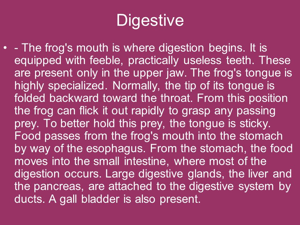 Digestive - The frog's mouth is where digestion begins. It is equipped with feeble, practically useless teeth. These are present only in the upper jaw
