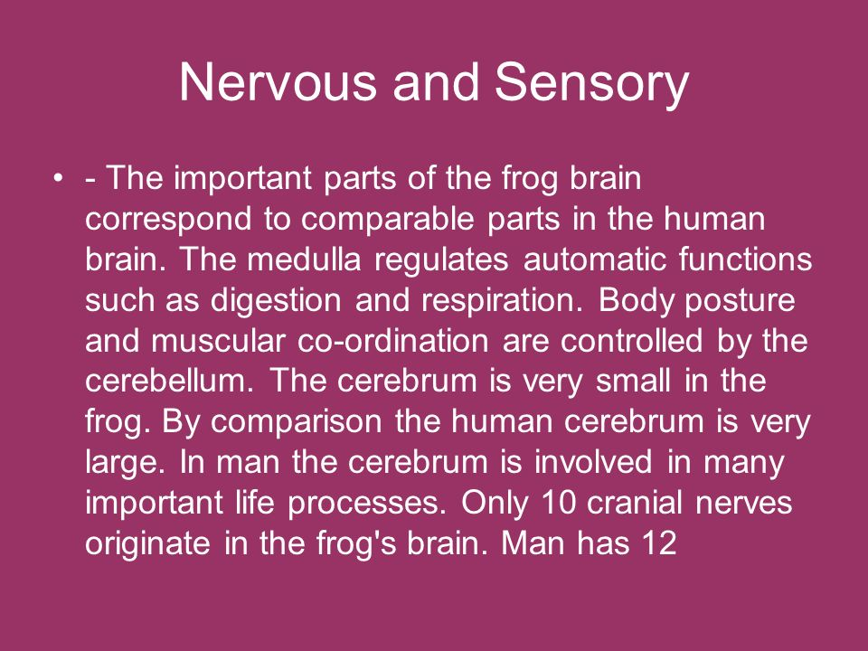 Nervous and Sensory - The important parts of the frog brain correspond to comparable parts in the human brain. The medulla regulates automatic functio