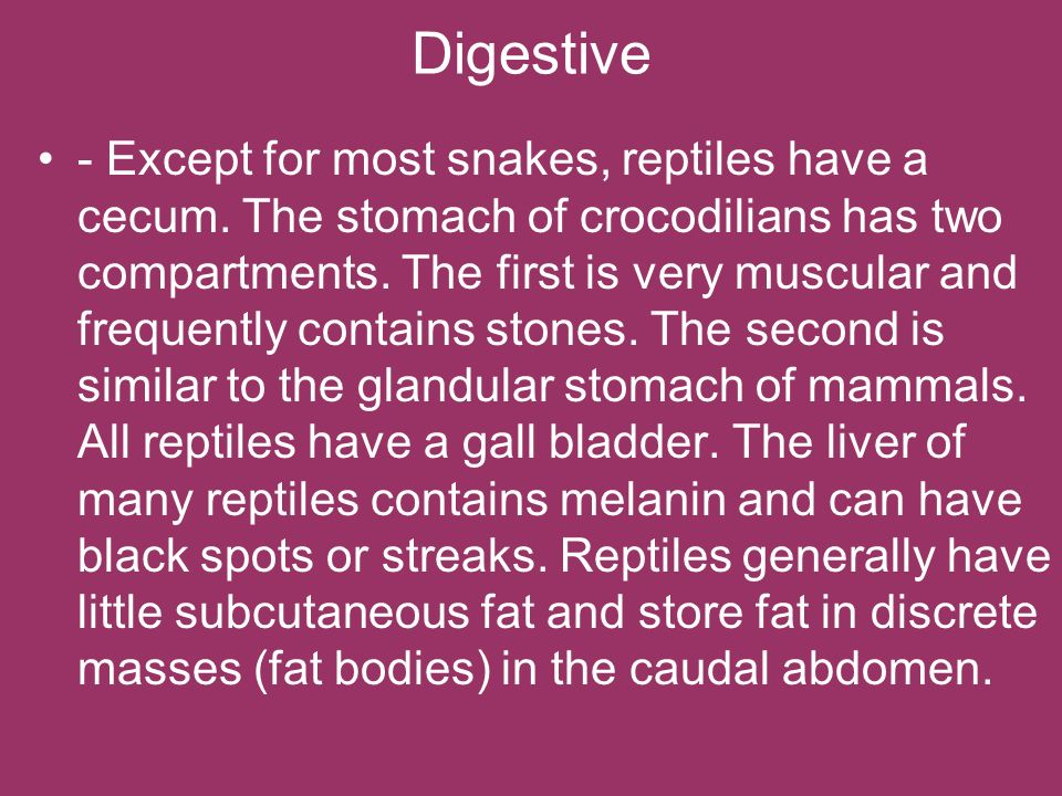 Digestive - Except for most snakes, reptiles have a cecum. The stomach of crocodilians has two compartments. The first is very muscular and frequently