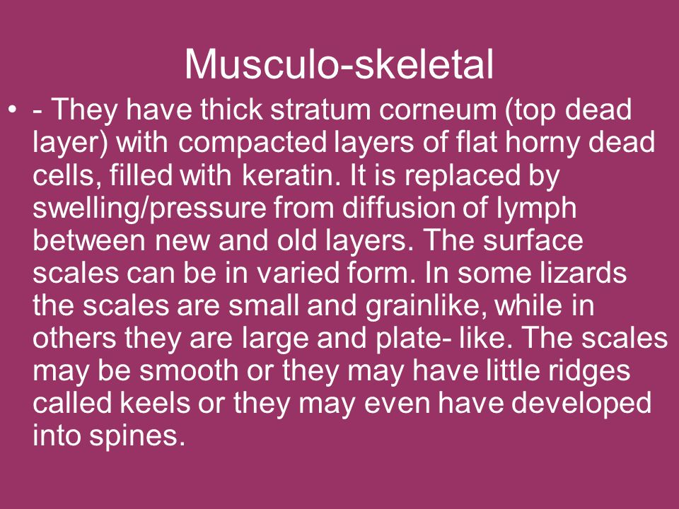 Musculo-skeletal - They have thick stratum corneum (top dead layer) with compacted layers of flat horny dead cells, filled with keratin. It is replace