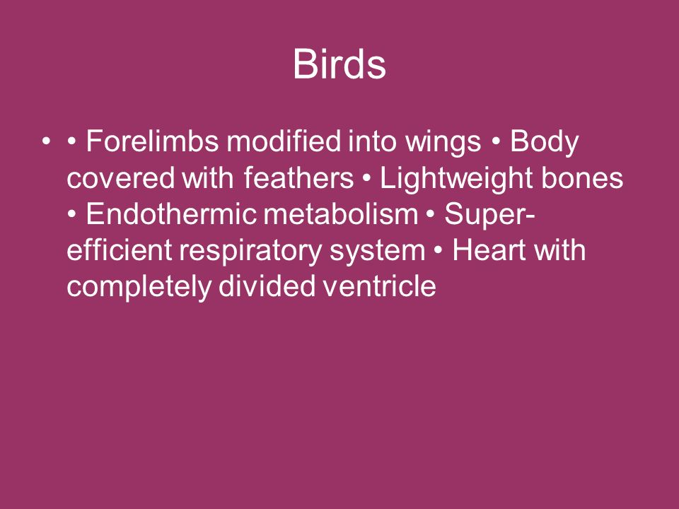 Birds Forelimbs modified into wings Body covered with feathers Lightweight bones Endothermic metabolism Super- efficient respiratory system Heart with