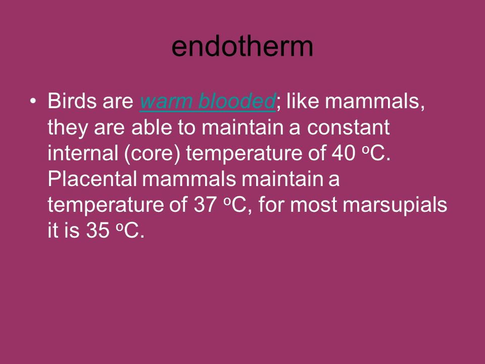endotherm Birds are warm blooded; like mammals, they are able to maintain a constant internal (core) temperature of 40 o C. Placental mammals maintain
