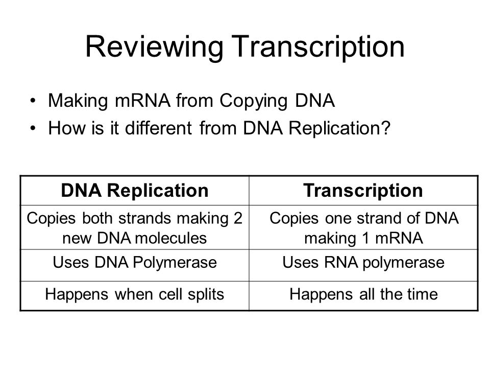 Reviewing Transcription Making mRNA from Copying DNA How is it different from DNA Replication? DNA ReplicationTranscription Copies both strands making