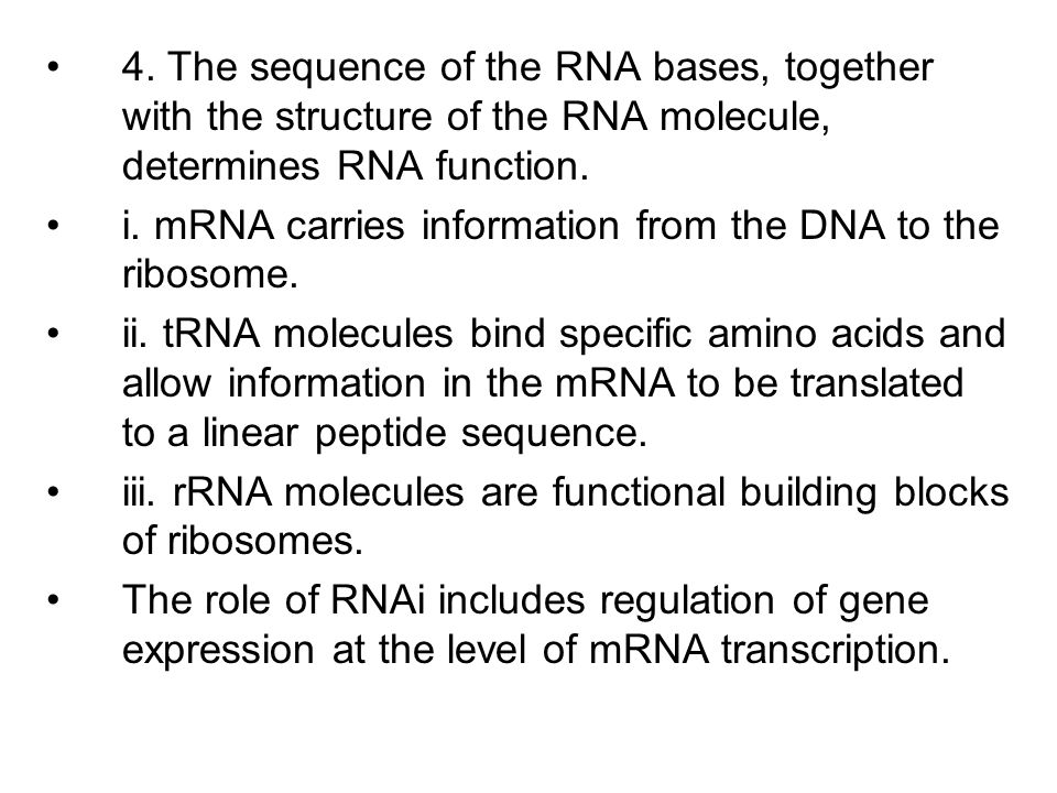 4. The sequence of the RNA bases, together with the structure of the RNA molecule, determines RNA function. i. mRNA carries information from the DNA t