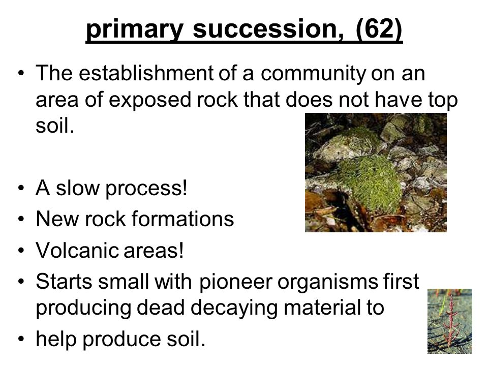 primary succession, (62) The establishment of a community on an area of exposed rock that does not have top soil. A slow process! New rock formations