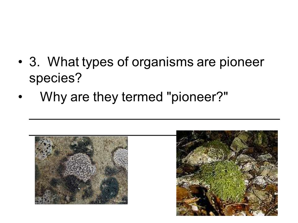 3. What types of organisms are pioneer species? Why are they termed