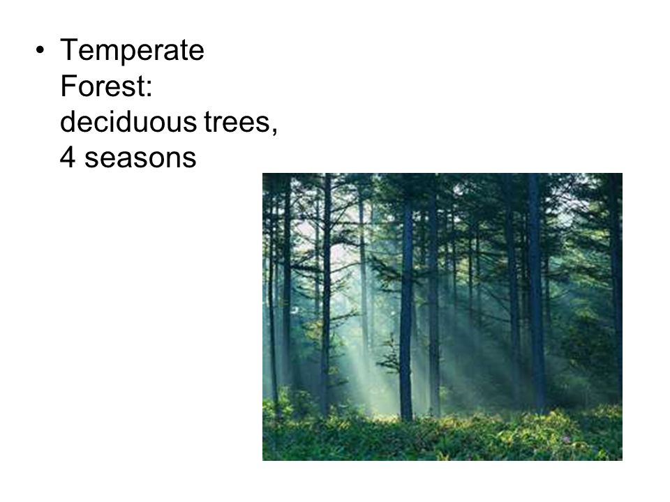 Temperate Forest: deciduous trees, 4 seasons