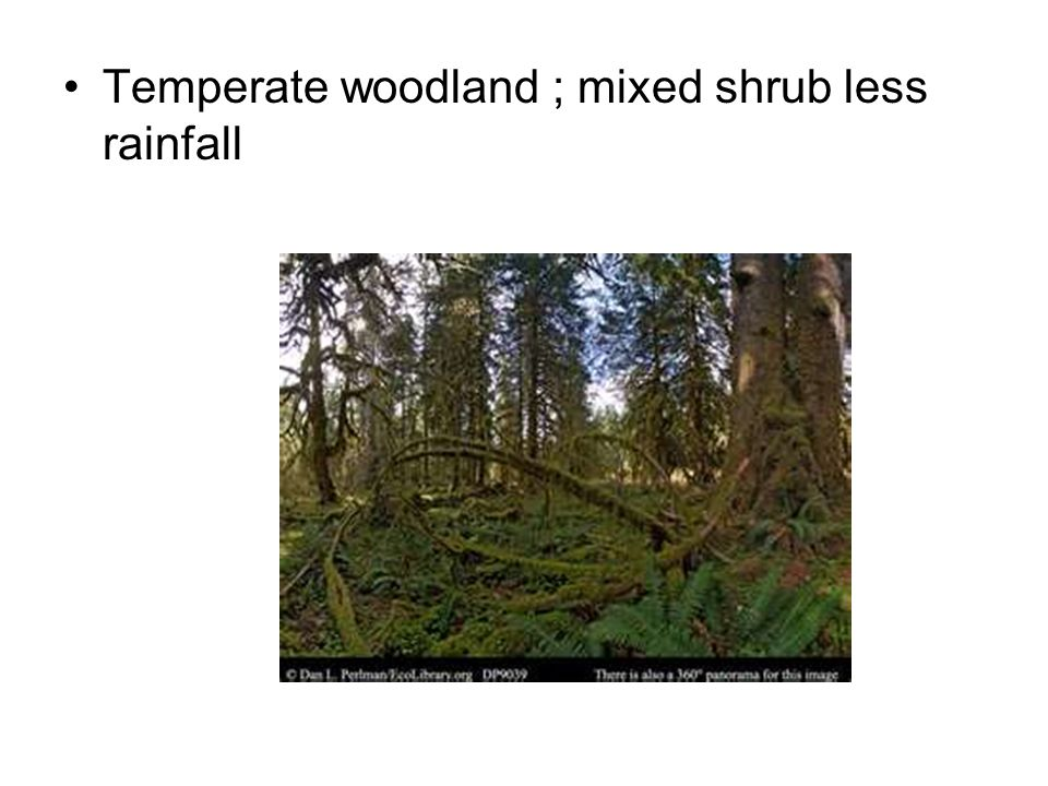 Temperate woodland ; mixed shrub less rainfall