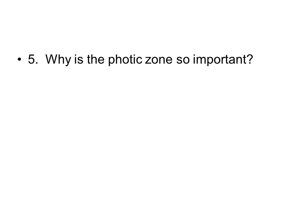5. Why is the photic zone so important?
