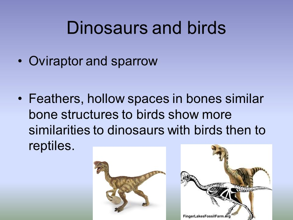 Dinosaurs and birds Oviraptor and sparrow Feathers, hollow spaces in bones similar bone structures to birds show more similarities to dinosaurs with b