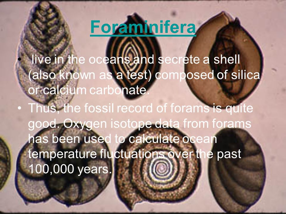Foraminifera live in the oceans and secrete a shell (also known as a test) composed of silica or calcium carbonate. Thus, the fossil record of forams
