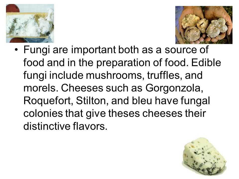 Fungi are important both as a source of food and in the preparation of food. Edible fungi include mushrooms, truffles, and morels. Cheeses such as Gor