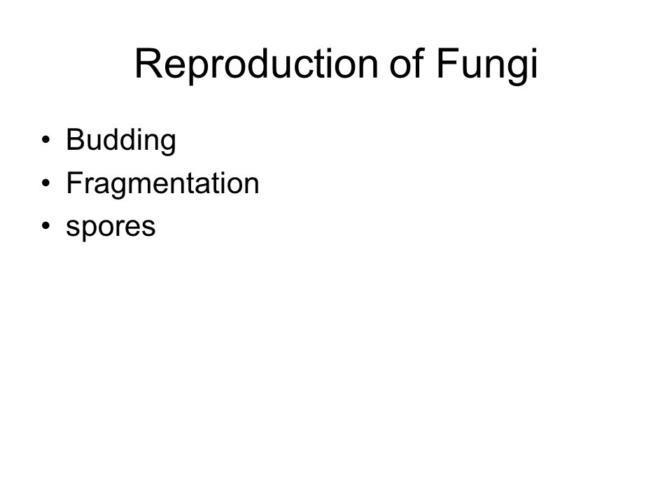 Reproduction of Fungi Budding Fragmentation spores