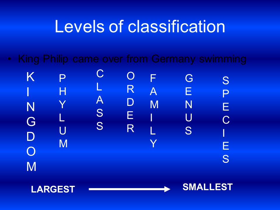 Levels of classification King Philip came over from Germany swimming KINGDOMKINGDOM PHYLUMPHYLUM CLASSCLASS ORDERORDER FAMILYFAMILY GENUSGENUS SPECIES