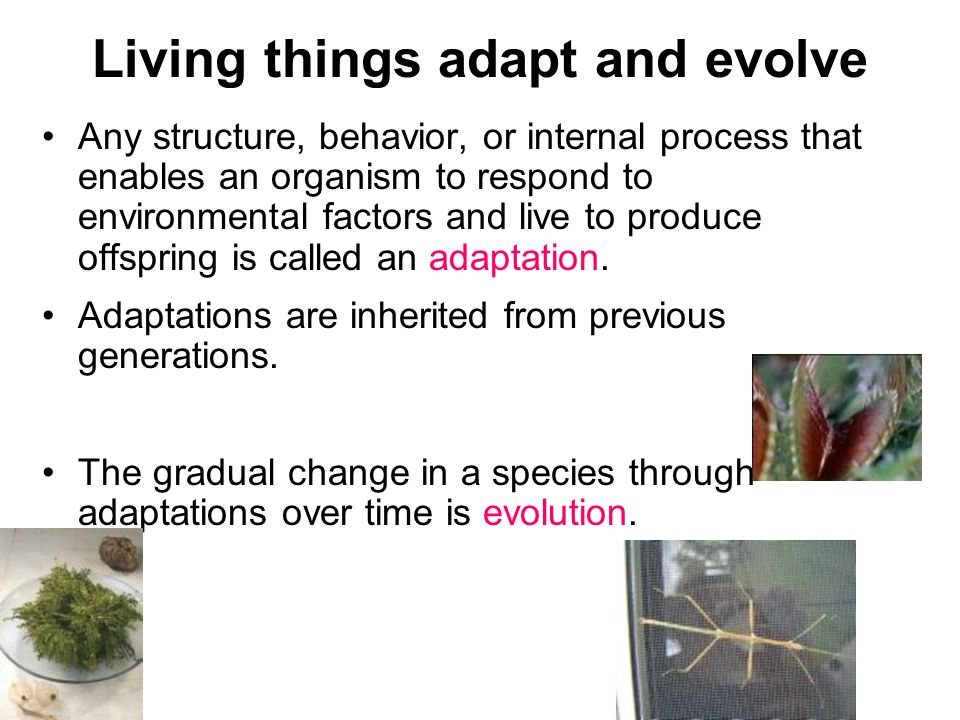 Living things adapt and evolve Any structure, behavior, or internal process that enables an organism to respond to environmental factors and live to p