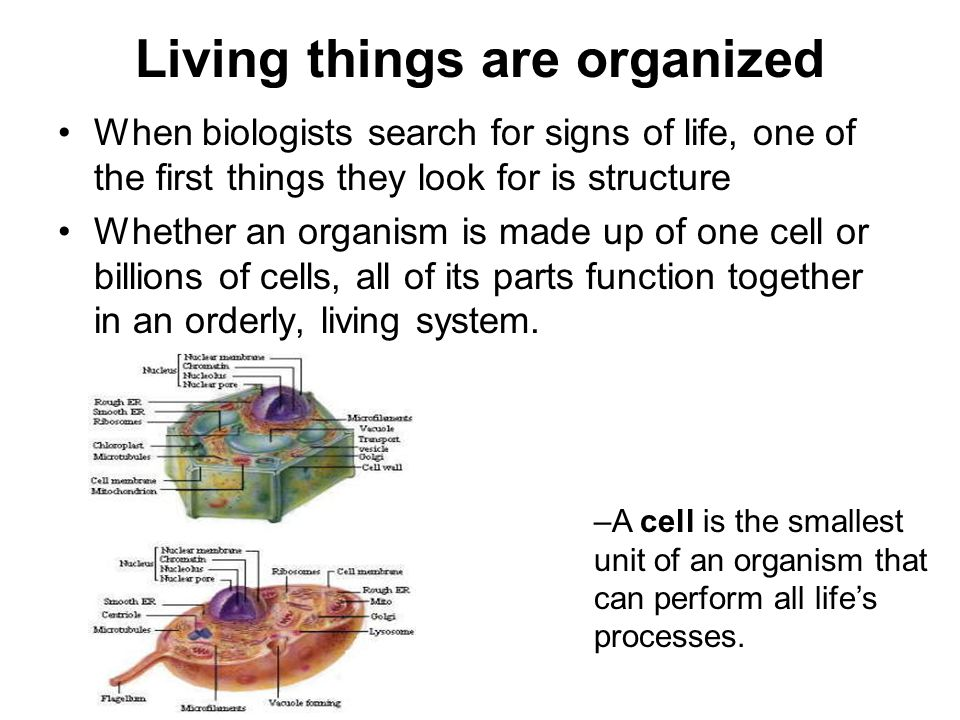 Living things are organized When biologists search for signs of life, one of the first things they look for is structure Whether an organism is made u