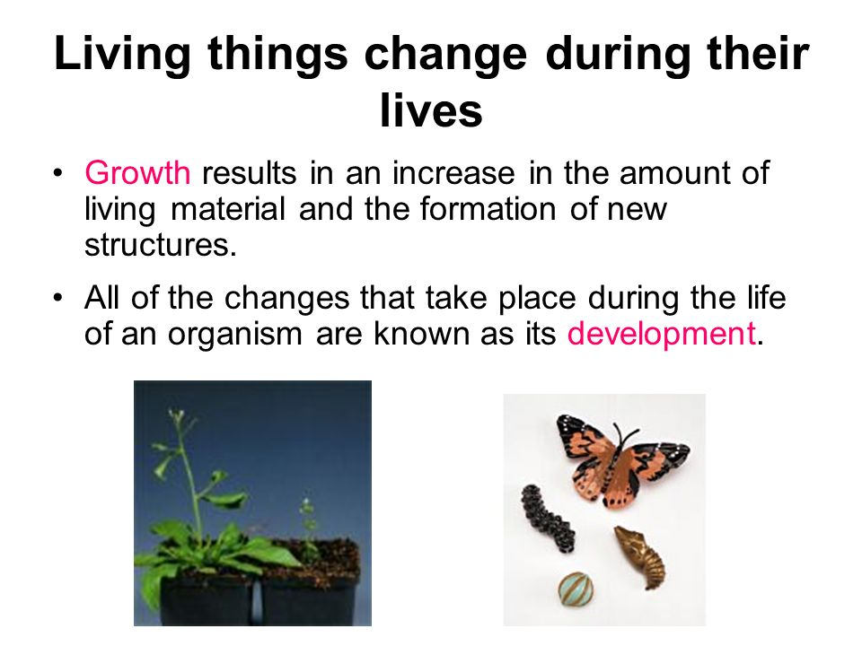 Living things change during their lives Growth results in an increase in the amount of living material and the formation of new structures. All of the