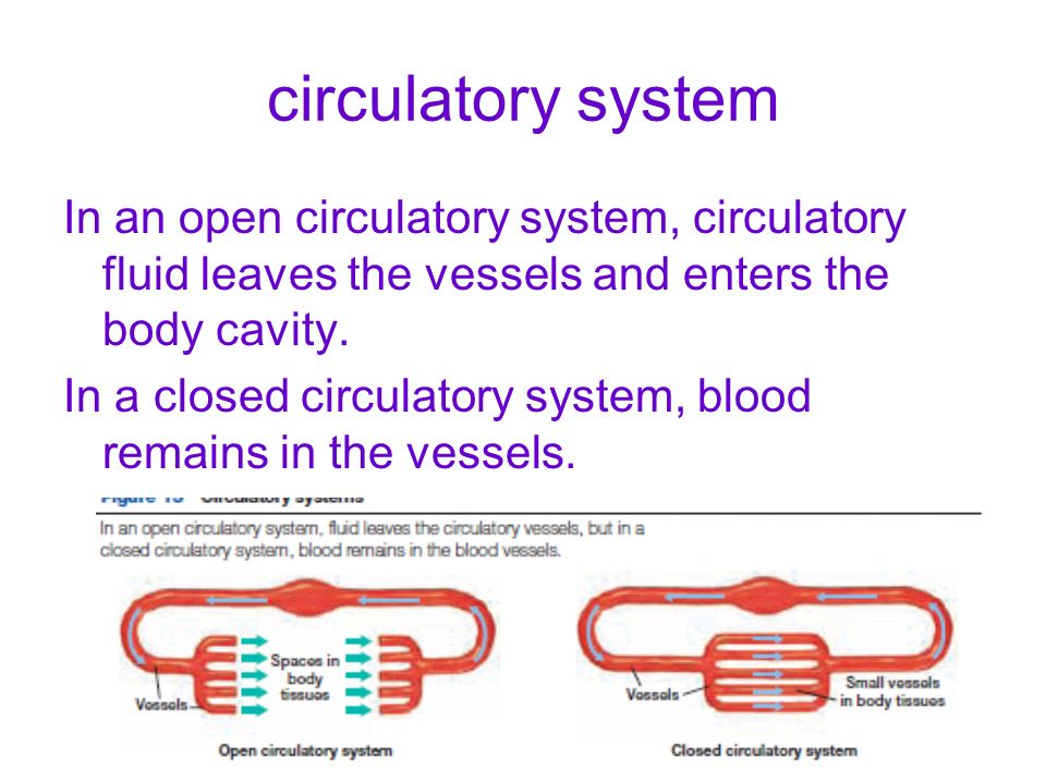 circulatory system In an open circulatory system, circulatory fluid leaves the vessels and enters the body cavity. In a closed circulatory system, blo