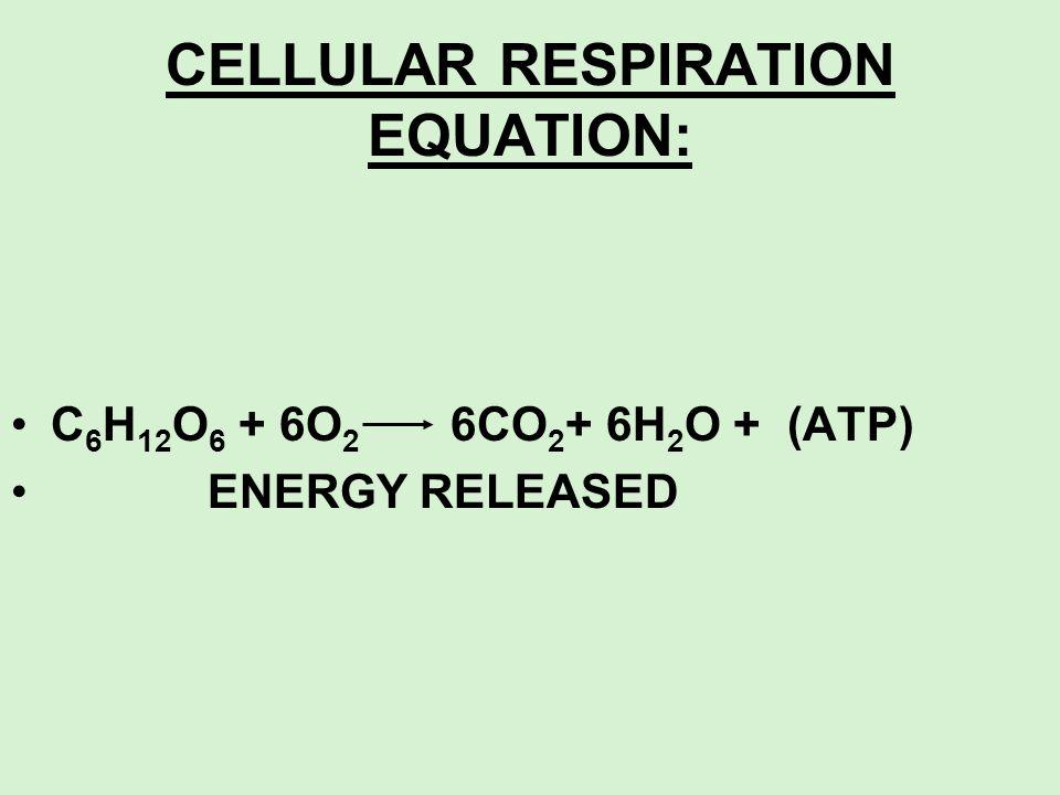 CELLULAR RESPIRATION EQUATION: C 6 H 12 O 6 + 6O 2 6CO 2 + 6H 2 O + (ATP) ENERGY RELEASED