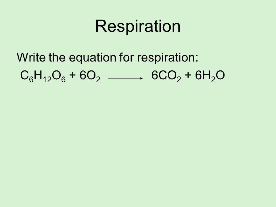 Respiration Write the equation for respiration: C 6 H 12 O 6 + 6O 2 6CO 2 + 6H 2 O