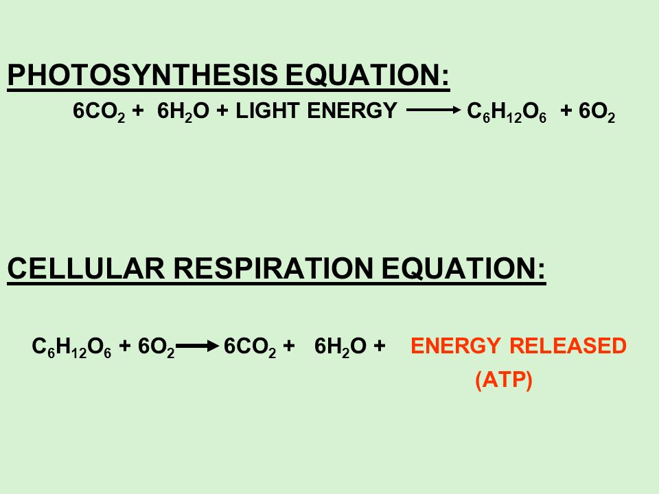 PHOTOSYNTHESIS EQUATION: 6CO 2 + 6H 2 O + LIGHT ENERGY C 6 H 12 O 6 + 6O 2 CELLULAR RESPIRATION EQUATION: C 6 H 12 O 6 + 6O 2 6CO 2 + 6H 2 O + ENERGY