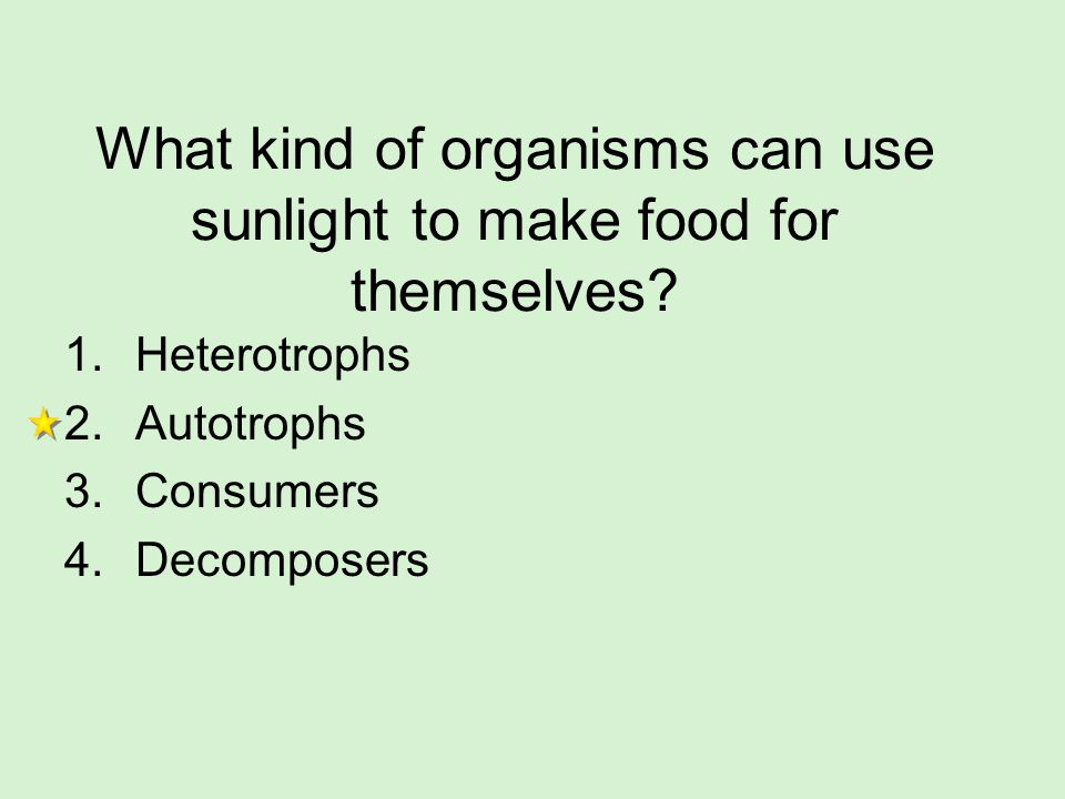 What kind of organisms can use sunlight to make food for themselves? 1.Heterotrophs 2.Autotrophs 3.Consumers 4.Decomposers