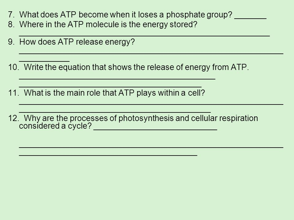 7. What does ATP become when it loses a phosphate group? _______ 8. Where in the ATP molecule is the energy stored? __________________________________