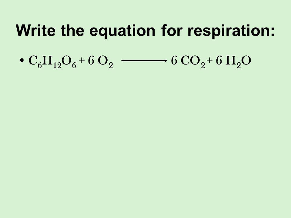 Write the equation for respiration: C 6 H 12 O 6 + 6 O 2 6 CO 2 + 6 H 2 O