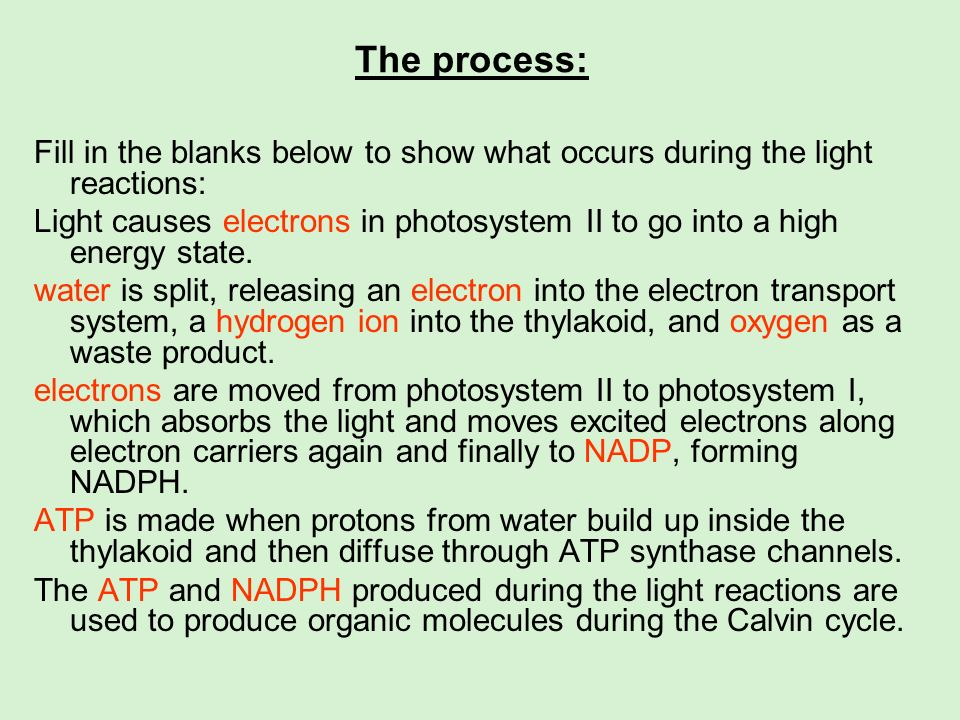 The process: Fill in the blanks below to show what occurs during the light reactions: Light causes electrons in photosystem II to go into a high energ