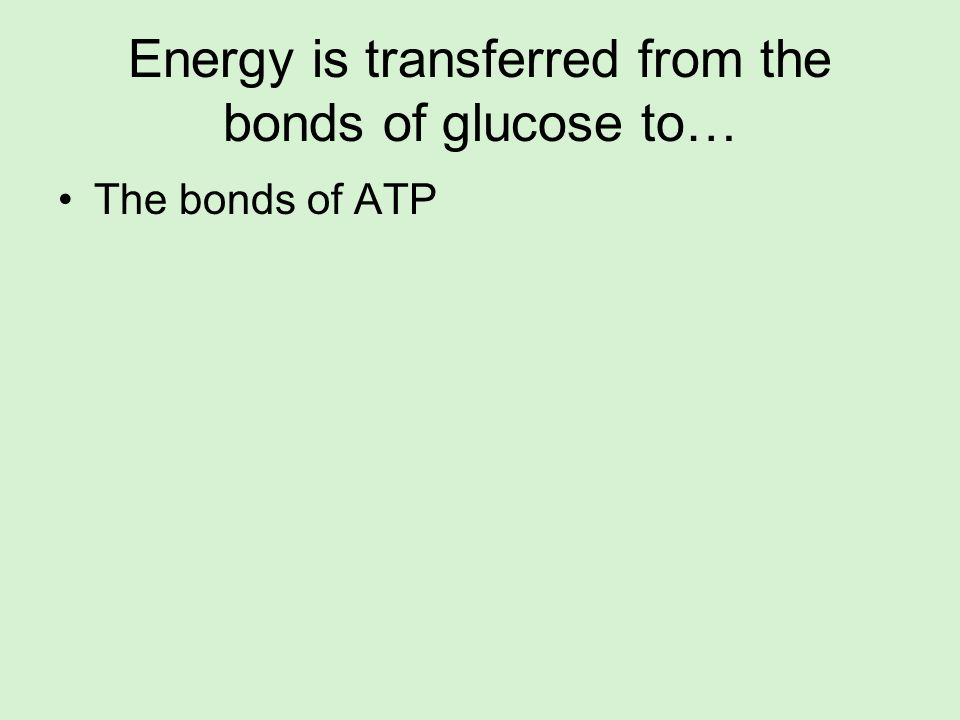 Energy is transferred from the bonds of glucose to… The bonds of ATP